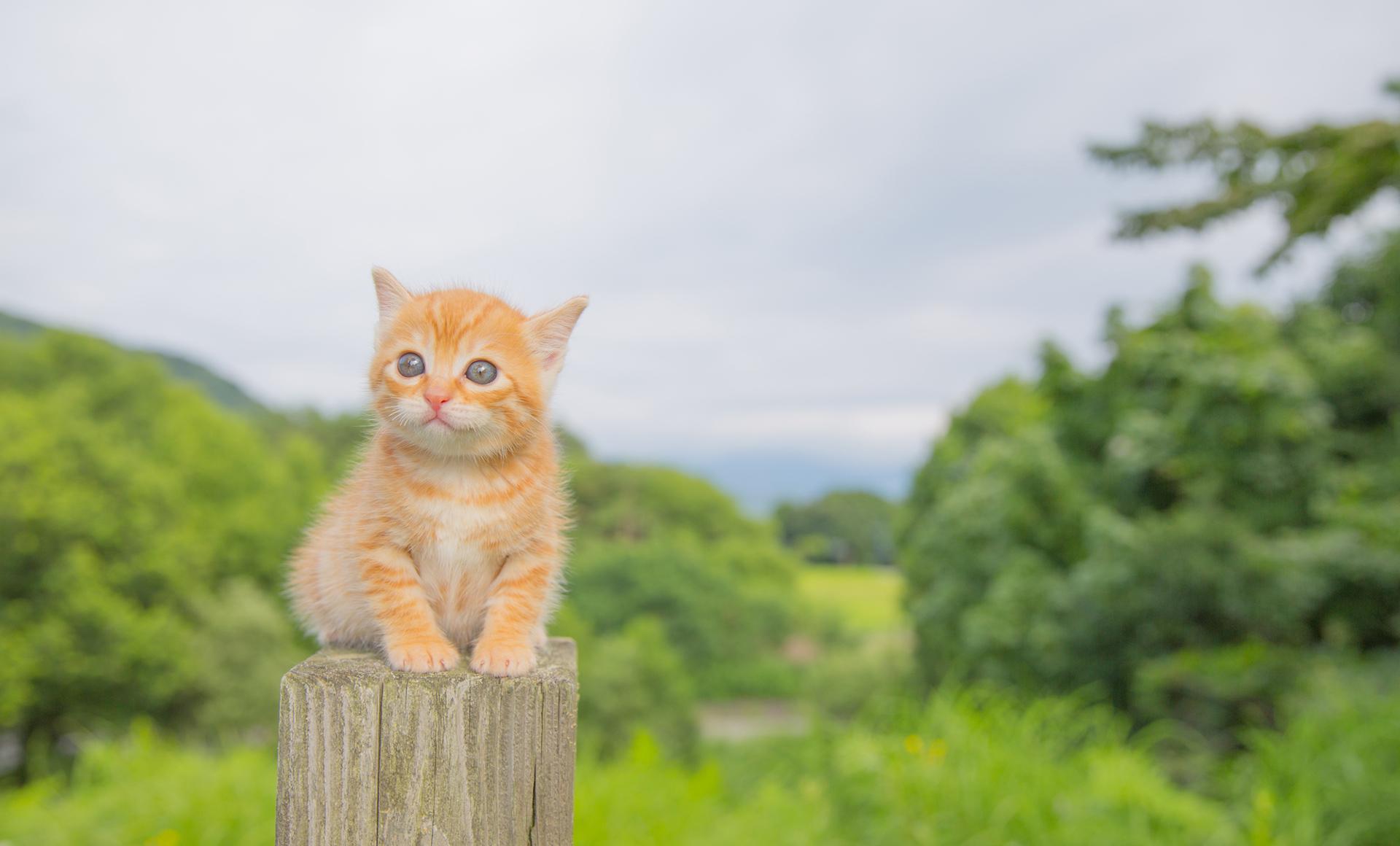 株式会社ペトリスはペット(子犬・子猫)とご家族の出会いをサポートします。